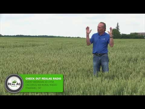 Wheat School -  Drought Impact