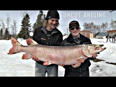 First Musky EVER from Lake Winnipeg?? – Uncut Angling – April 10, 2014