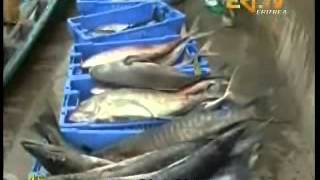 Eritrea - LIVE EriTV Tigrinya News From 12-04-2012