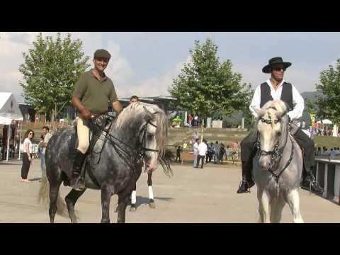 Reportagem da 'MaisPortugalTv' sobre IV Feira do Cavalo de Ponte de Lima
