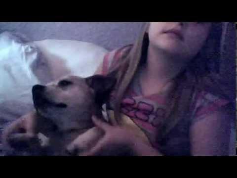 dancing dog xxx (видео)