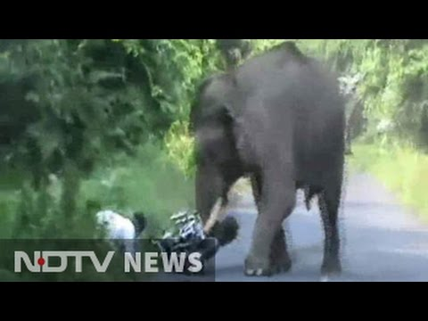 Narrow escape for bikers in elephant attack