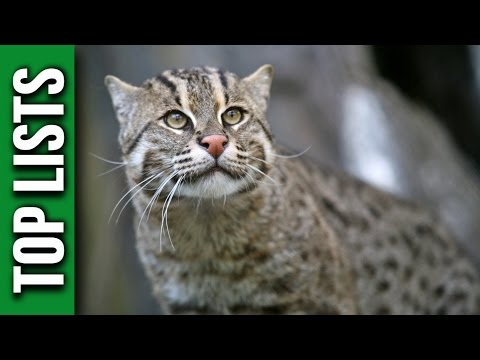 3 dei gatti più belli e pregiati al mondo