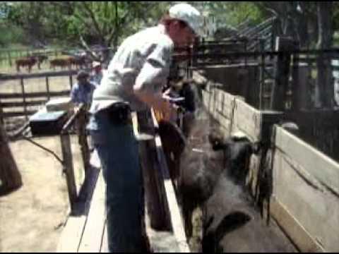 Считывание болюсов в организме животных