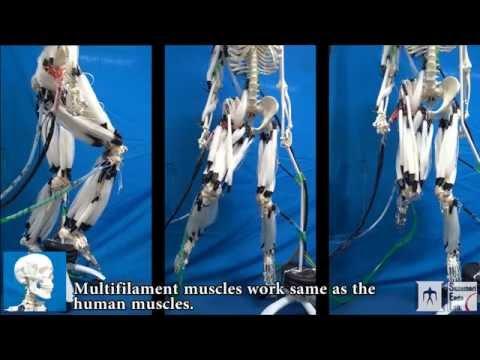 Tämä japanilainen robotti liikkuu keinotekoisilla lihaksilla