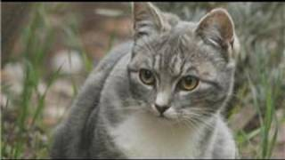 Cat Care&Health : Cat Respiratory Diseases