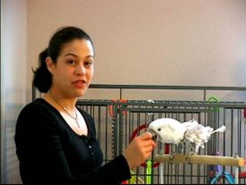 How to Train a Parrot : How to Give Treats to Train Parrots