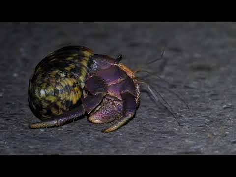 Mission-Land Crab Redemption