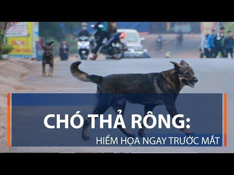 Tàu Cát Linh – Hà Đông bao giờ khởi chạy? | VTC1 - Thời lượng: 2 phút, 51 giây.