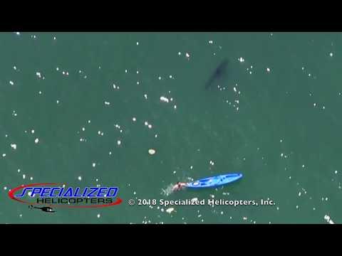 Der Hai-Alarm