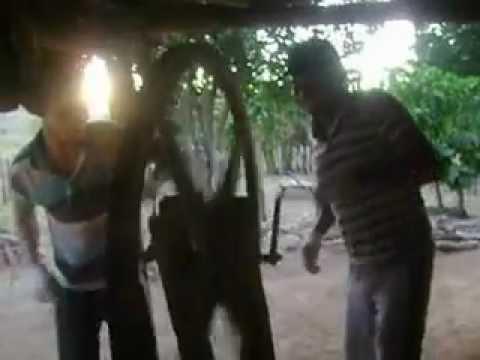 ralando mandioca em Pindorama