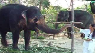Maneerat Elephant Tours Koh Phangan Thailand