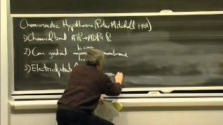 Glycolysis, Respiration, And Fermentation | MIT 7.01SC Fundamentals Of Biology