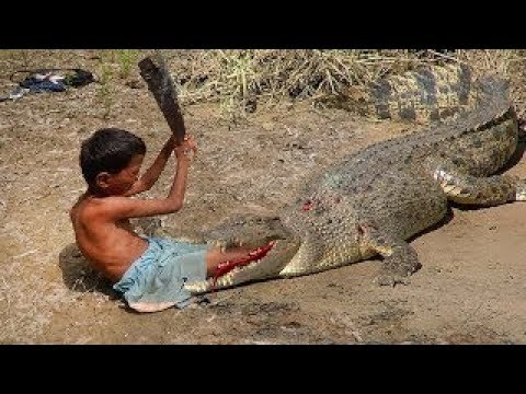 How To Trap Crocodile Using Wood & Small chick (Works 100%)