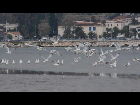 Παρατήρηση, αναγνώριση και καταμέτρηση των υδρόβιων πουλιών στον υγρότοπο Ναυπλίου Νέας Κίου