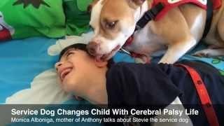 كلب يساعد طفلا مقعدا