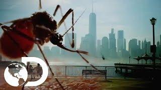 Mosquito: Uma Ameaça no Ar retrata o avanço do vetor de doenças como dengue, zika, malária e febre amarela por diversos países do mundo, e mostra o que a humanidade deve fazer para se salvar dessa praga.