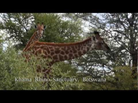 Kubwa Tours: Kruger National Park, Victoria Falls, Okavango Delta