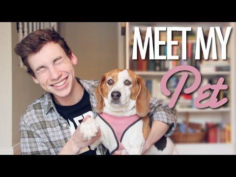 MEET MY SASSY DOG (Meet My Pet Tag)
