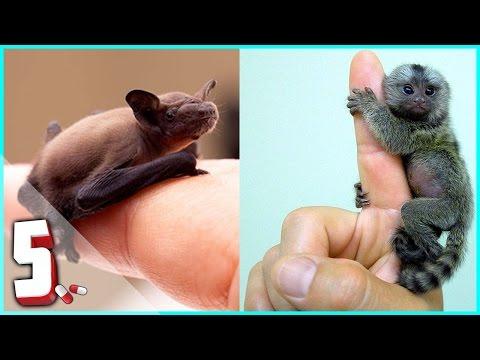 i 5 animali più piccoli del mondo