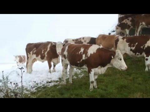Αυστρία: Χιονοπτώσεις στην καρδιά του καλοκαιριού