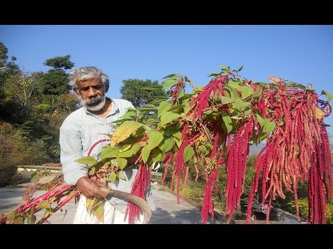 Baranaja: a climate resilient farming practice