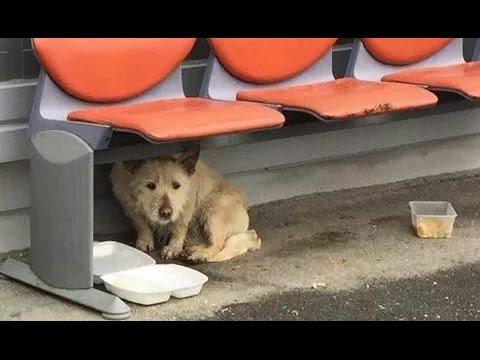 la trasformazione di un cane abbandonato e poi salvato !
