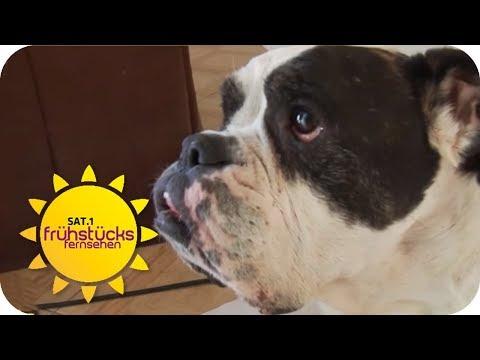 Wegen Amt: Hundehospiz soll verboten werden! | SAT.1 Frühstücksfernsehen