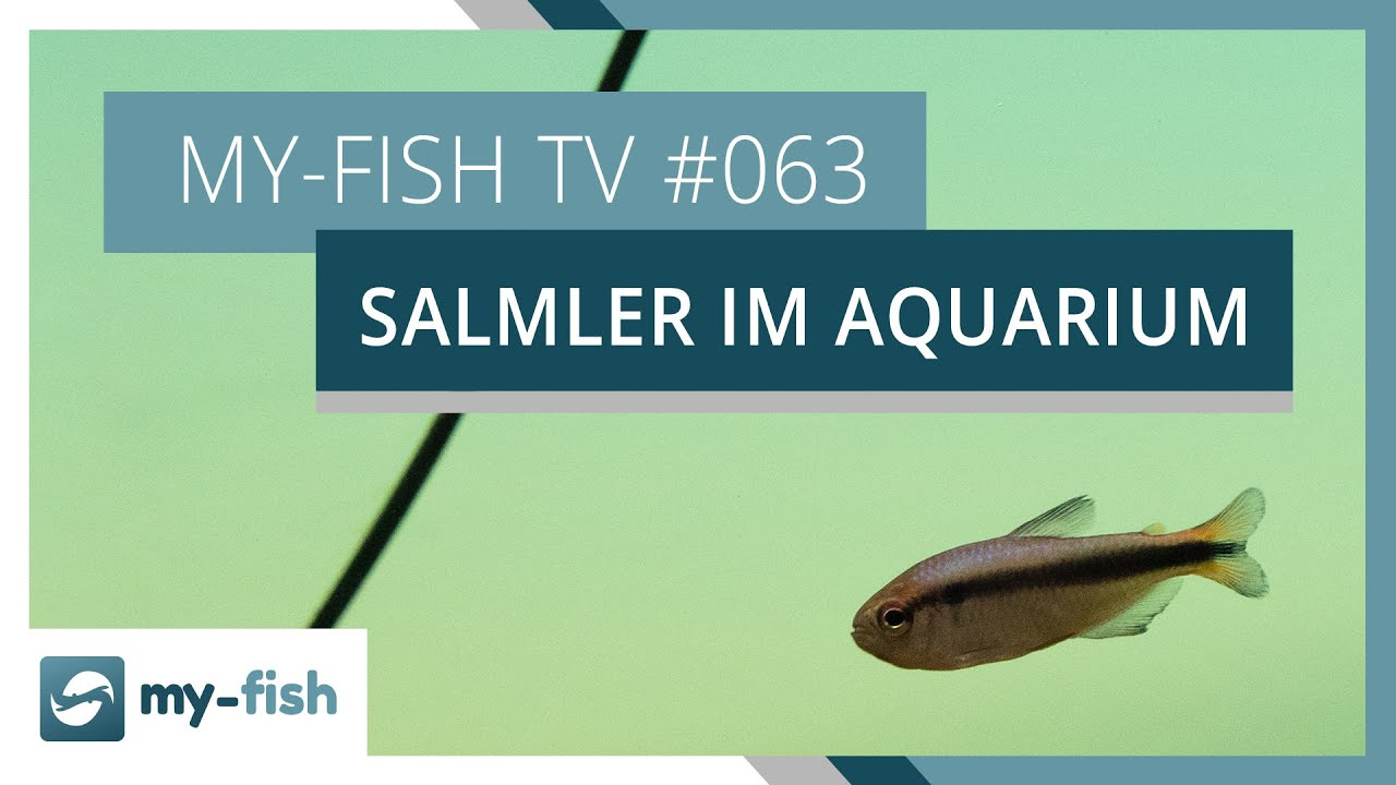 my-fish TV - Deine Nr. 1 Anlaufstelle für alle Themen rund um die Aquaristik 1