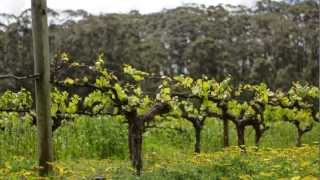 Margaret River Wine Regio Australia  city photos : Leeuwin Estate, Margaret River, Western Australia