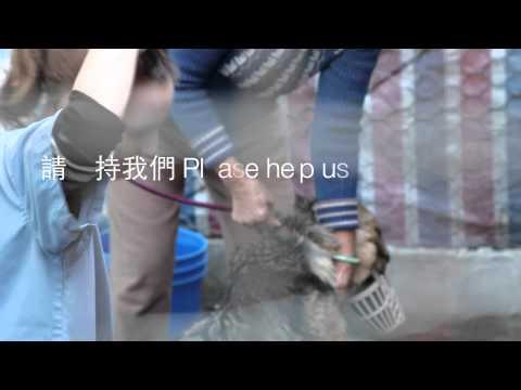 Short promotion SPCA animal rescue