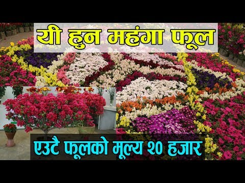 21st Flora Expo 2018