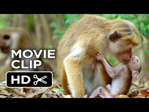 Monkey Kingdom Clip 'Kip'