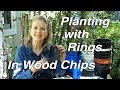 Planting with Rings in Wood Chips | Kaye's Garden VlogPlanting with Rings in Wood Chips | Kaye's Garden Vlog<media:title />