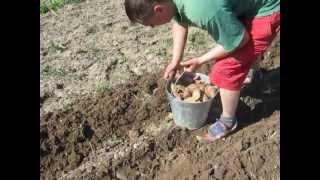 Садимо картоплю метод Edmonda 1.AVI