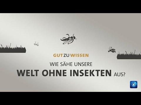 Eine Welt ohne Insekten?