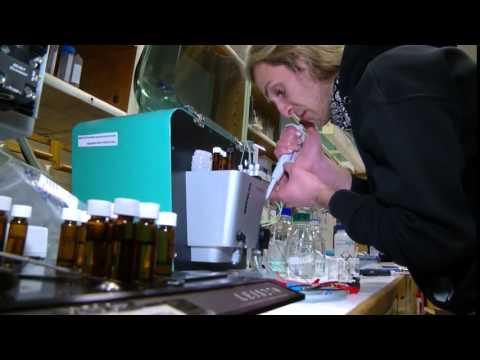 Molekulinės technologijos ir inžinerinės idėjos medicinai
