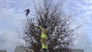 Vogel zit vast aan visdraad in boom in Bunschoten