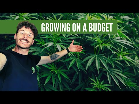 How to Grow Cannabis on a budget (EP79)