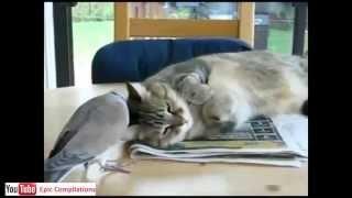 Gatti pazzi prova a non ridere animali divertenti for Youtube cani e gatti