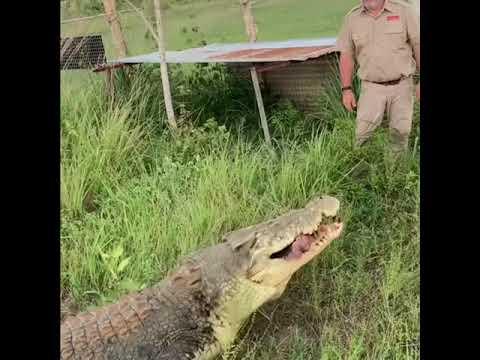 Giant Crocodile Hunting