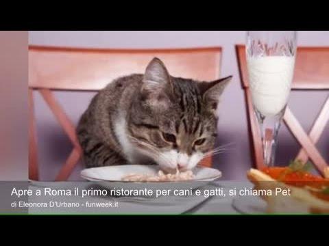 apre a roma il primo ristorante per cani e gatti, si chiama pet!