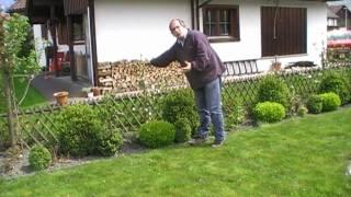 #74 Verwendung von Malini und Maloni im Garten