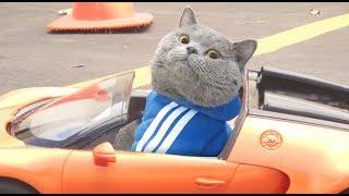 Nonton 2 Fast 2 Furryest Film Subtitle Indonesia Streaming Movie Download