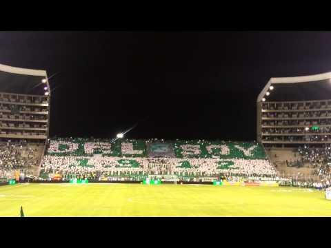 SALIDA Y TIFO HD DEPORTIVO CALI VS NACIONAL PLAY-OFF - Frente Radical Verdiblanco - Deportivo Cali