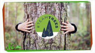 Terrific Trees: A SciShow #TeamTrees Compilation by  SciShow