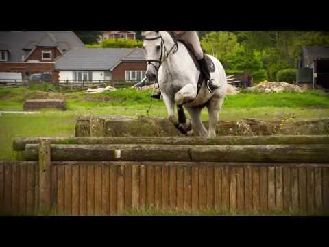 Ló és lovasa közti kapcsolat Mark Todd szemével