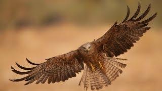 DJ sGs - Desert eagle original mix