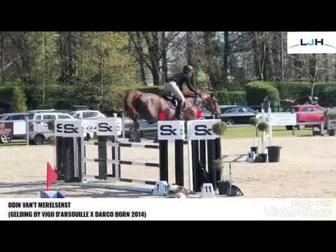 ODIN VAN'T MERELSNEST 7YO TRAINING SHOW BORNIVAL APRIL 2021