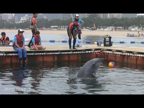 神戸・須磨海岸でイルカを飼育